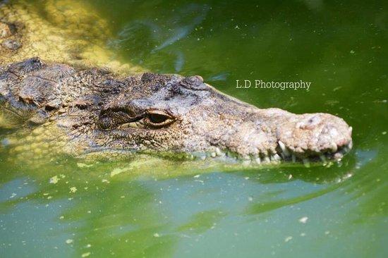 Crocodile Park: Swim