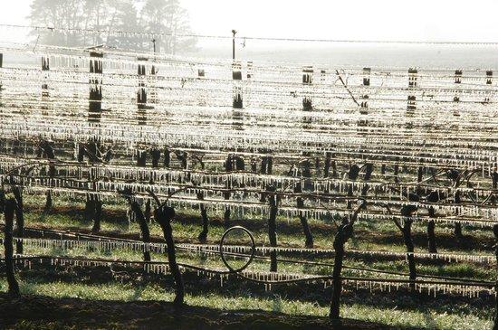 Lancefield, Australien: Cleveland Winery vineyard