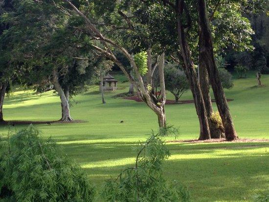 Four Seasons Resort Lana'i, The Lodge at Koele: Beautiful surroundings and walking paths