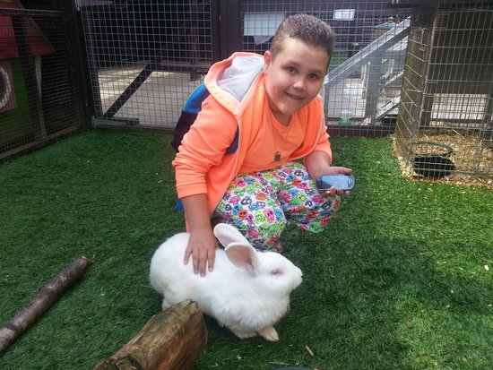 Five Sisters Zoo: petting the rabbit inside its enclosure.