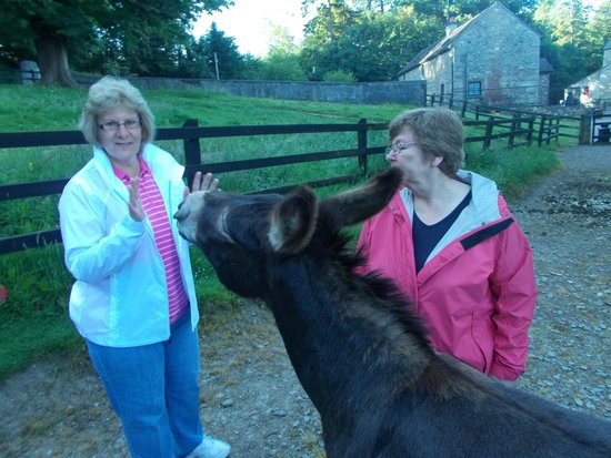Mill Farm Cottages: My sister balked at receiving the traditional welcoming kiss