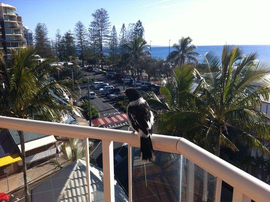 Sandcastles Mooloolaba: Visitor for breakfast