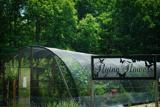 "Beagle Ridge Herb Farm : ""Flying Flowers"" = love it!"