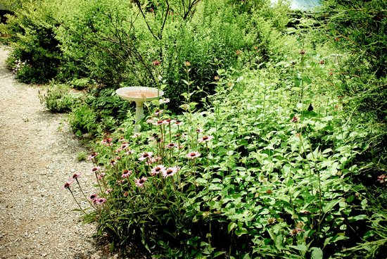 Beagle Ridge Herb Farm : Pretty landscaping.
