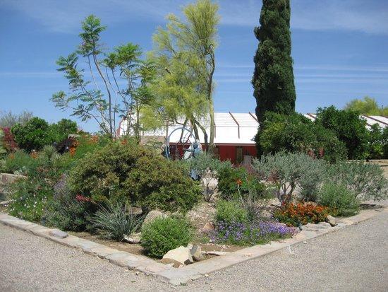 Taliesin West: The desert garden.