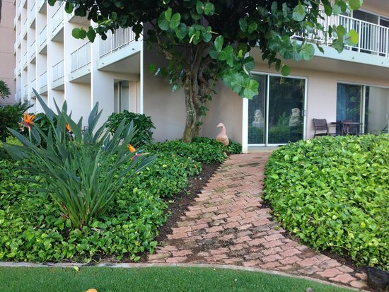 Kaua'i Marriott Resort : View of our corner room