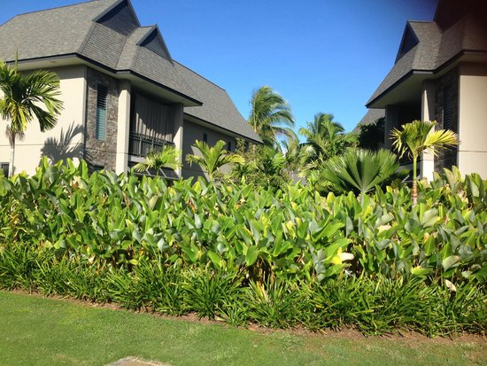 InterContinental Fiji Golf Resort & Spa: garden view rooms will face another room with a garden on a side