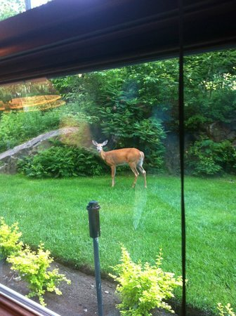 Les Suites de la Gare by Location ADP Tremblant: Wildlife at your window