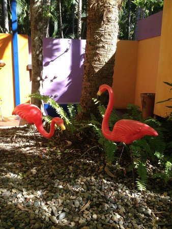 Pink Flamingo: courtyard in room