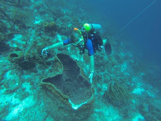 CURious2DIVE: huge barrel coral