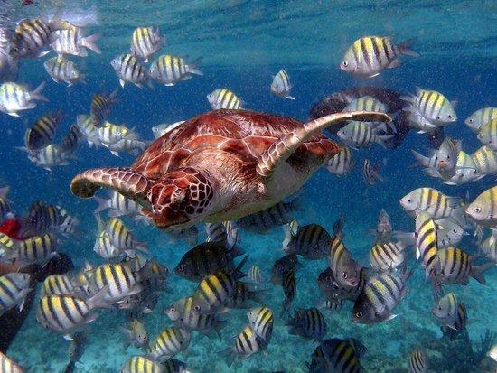 Paradise Catamarans: Turtle seen while snorkeling