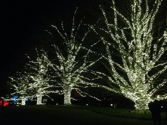 Longwood Gardens: christmas lights