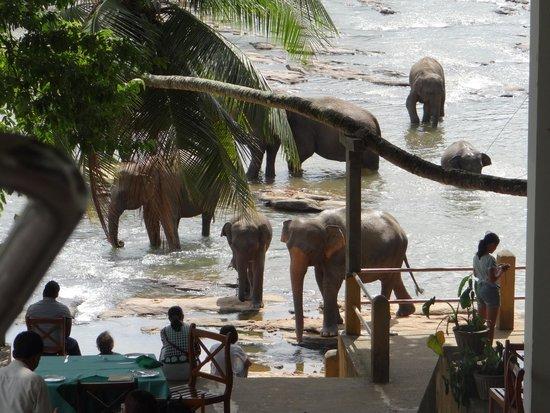 Hotel Elephant Bay: elephants at breakfast
