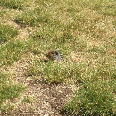 Manning Park, Canada: Ground squirrels