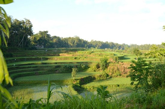 Villa Semana: overlooking rice paddies