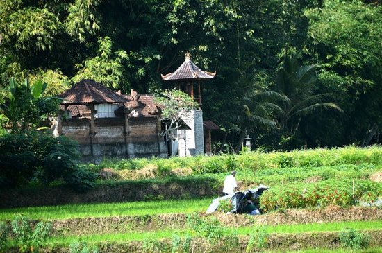 Villa Semana: view of sturcture across rice paddies