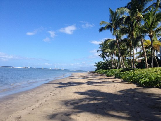Lahaina Shores Beach Resort: Beach
