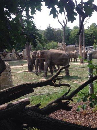 Prager Zoo: Слоны, на огромнейшей территории