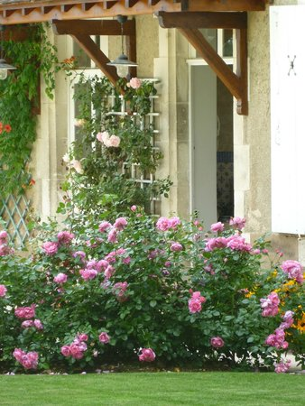 Cravant, Frankrike: roses