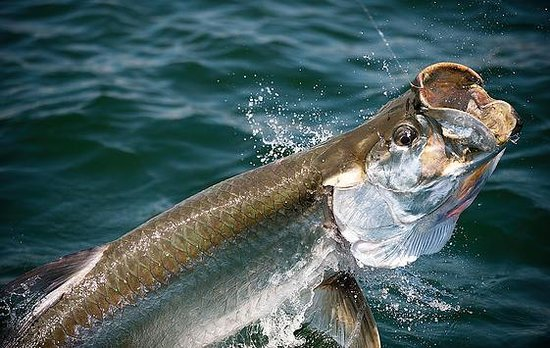 Live Action Fishing Charters of SW Florida
