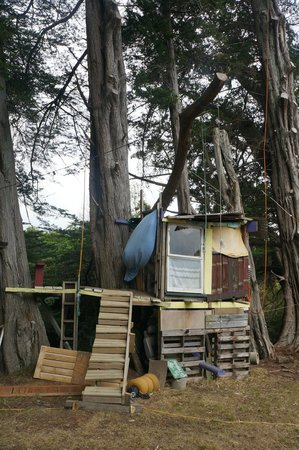 Fat Cat Eco Backpackers: Treehouse