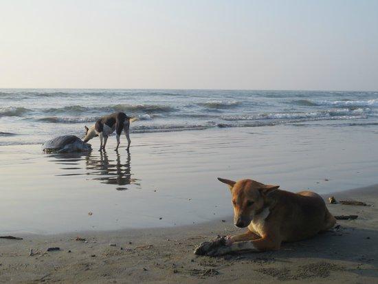 Cox's Bazar Beach: Natural habitat