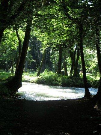 Ville de Divonne-les-Bains: Forest