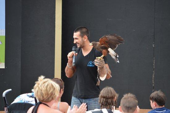 Sirenis Hotel Club Aura: Bird of prey show