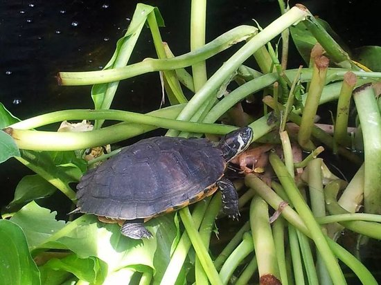 The City Gate Hotel: turtle in his pond at the hotel