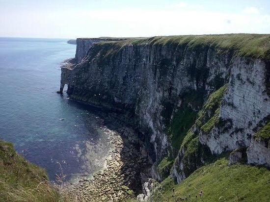 RSPB Bempton Cliffs: Bempton Cliffs viwed from Staple Newk