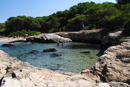 Porto Selvaggio : Vista dagli scogli sulla pineta!