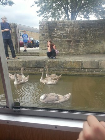 Skipton Boat Trips: Some signets on the water.