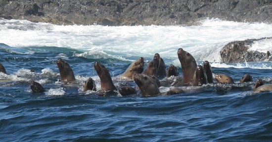The Whale Centre & Museum: Sea Lions