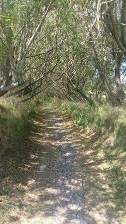Gypsy Wood Park : Willow walk way