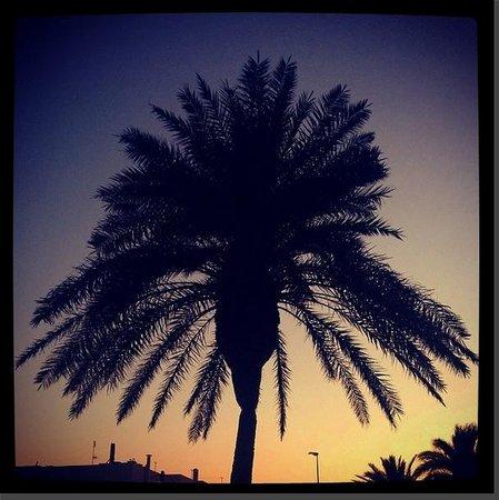 Sirenis Cala Llonga Resort: Palm tree