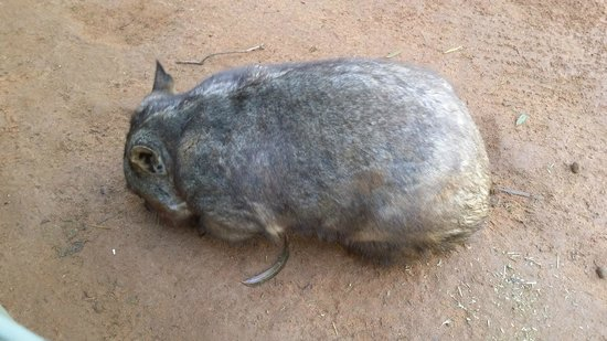 Featherdale Wildlife Park: Неведомый зверек