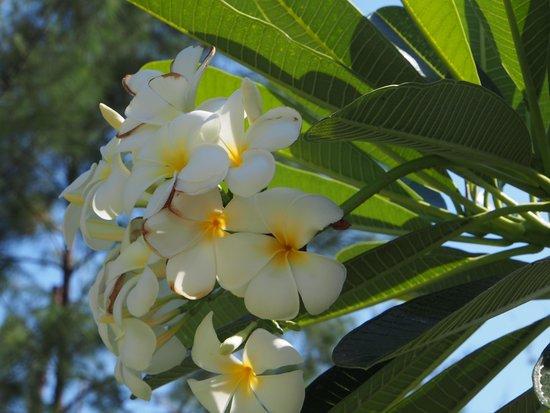 Adeng-Adeng Bungalows: Flowers in the garden