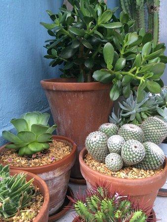 Lyonesse Guest House: Our garden