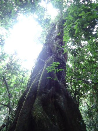 Active Tropics Explorer - Day Tours: Strangled tree
