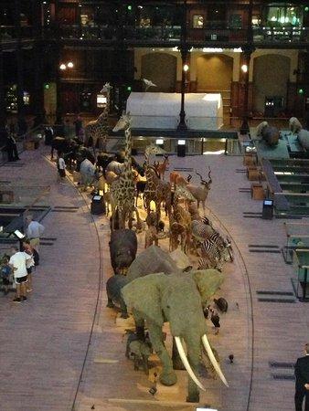Muséum National d'Histoire Naturelle : Museo