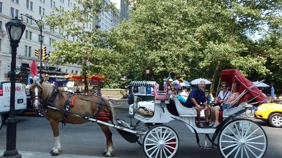 Warwick New York : horse and Buggy Ride