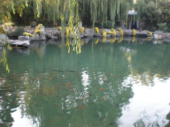 Baotu Spring Park: Goldfish in Baolu Gardens