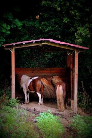Agriturismo Salella: i cavalli