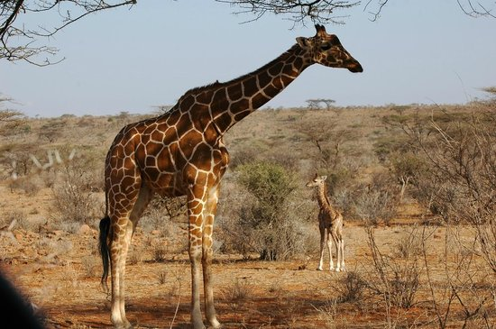 African Landmark Safaris - Day Tours