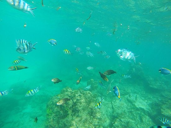 Aquarius Club : Safari blu! Snorkeling tra pesci stupendi