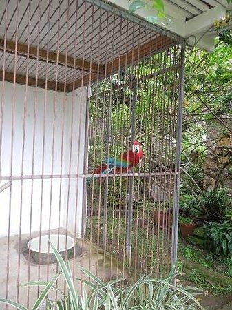 Le Jardin Du Roi Spice Garden: Poor parrot