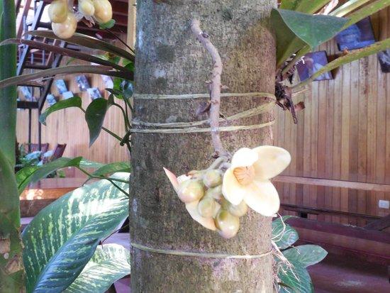 La Casa Fitzcarraldo: all kinds of interesting plants