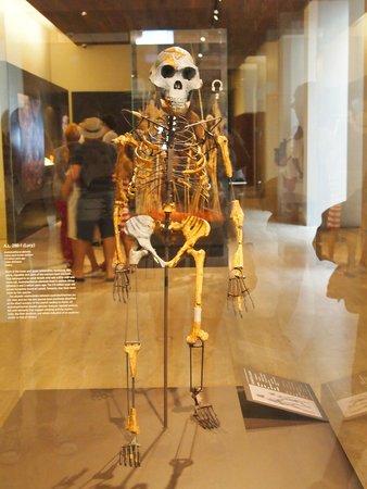 Museo Arqueológico Nacional: Lucy