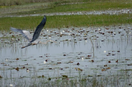Tigertail Airboat Tours : Lots of birds don't like the sound of airboats