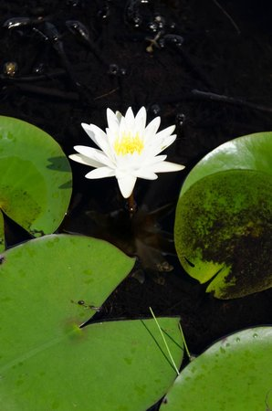 Tigertail Airboat Tours : Flowers in the Everglades
